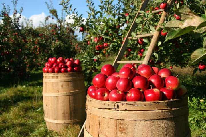 Where does bobbing for apples come from?