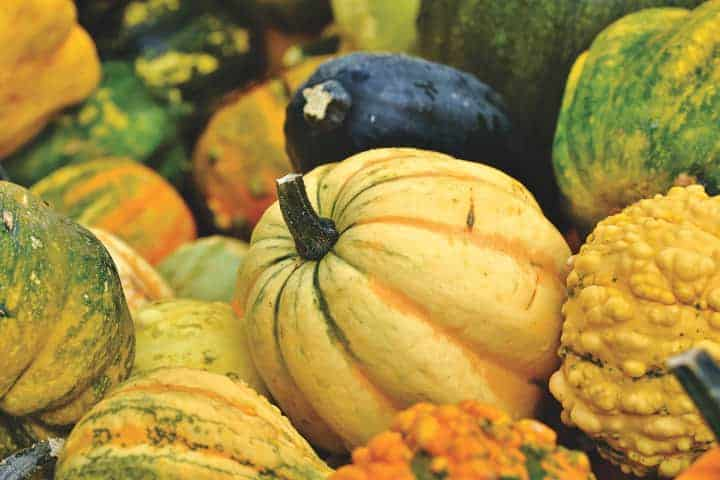 Are Pumpkins Fruit Or Vegetable