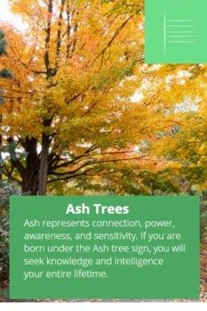 Ash tree astrology sign