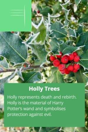 Holly tree with celtic ogham symbol