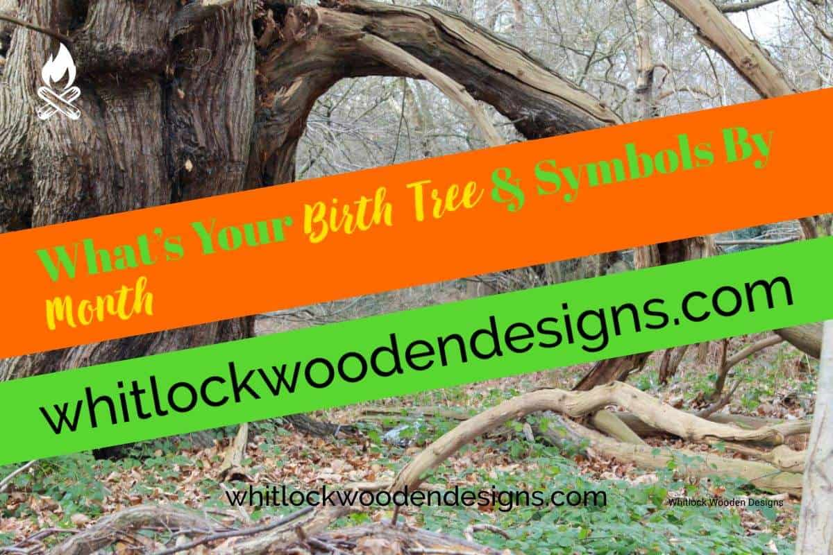 What's Your Birth Tree & Symbols By Month: Wood, Birthstones
