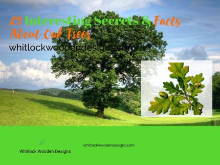 29 Interesting Secrets & Facts About Oak Trees