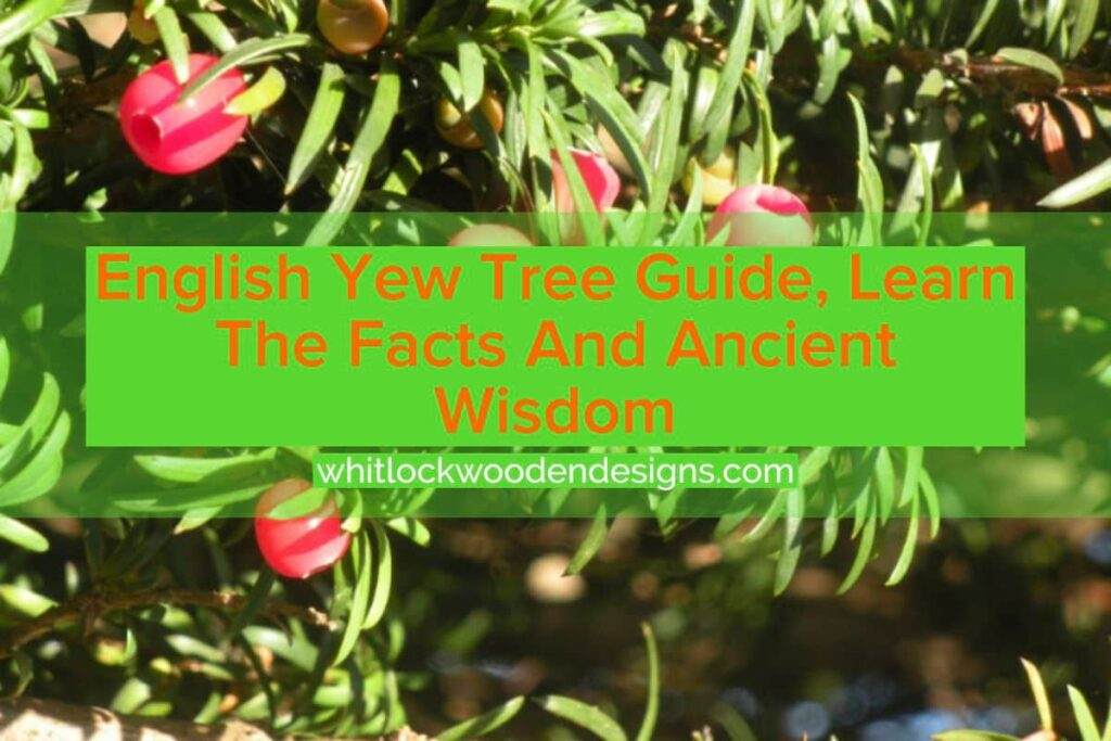 english wew tree guide, learn the facts and ancient wisdom