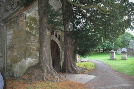 yew trees at st edwards church, stow on the wold